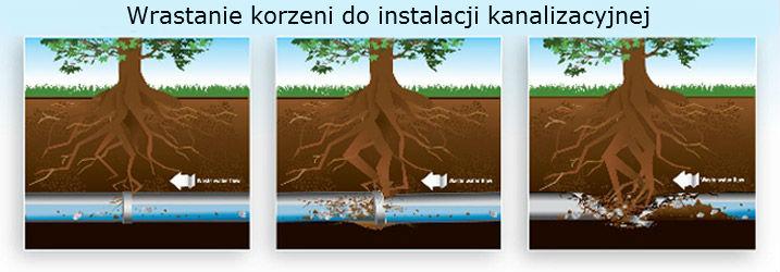 Usuwanie korzeni wrastających w kanalizację